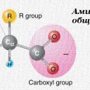 Аминокиселините – обща представа