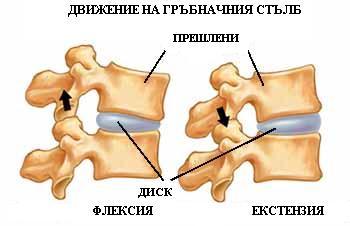 back_pain2