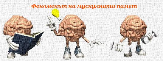 Феноменът на мускулната памет
