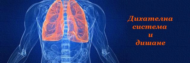 Дихателна система и дишане