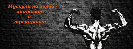 Мускули на гърба - анатомия и тренировка