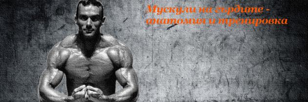 Мускули на гърдите – анатомия и тренировка