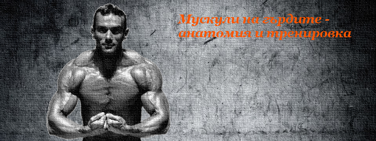 Мускули на гърдите - анатомия и тренировка