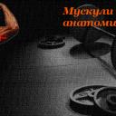 Мускули на рамената – анатомия и тренировка