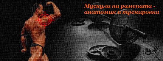 Мускули на рамената - анатомия и тренировка