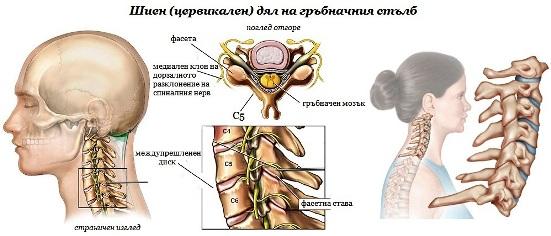 Цервикален гръбнак