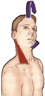 Стречинг за стерноклейдомастоидеус
