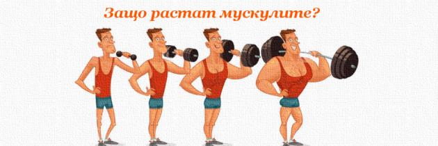 Механизми за мускулна хипертрофия (какво кара мускулите да растат?)