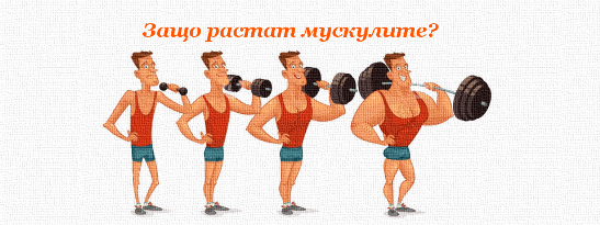 Защо растат мускулите?