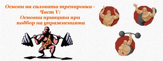 Основи на силовата тренировка - Част V: Основни принципи при подбор на упражненията
